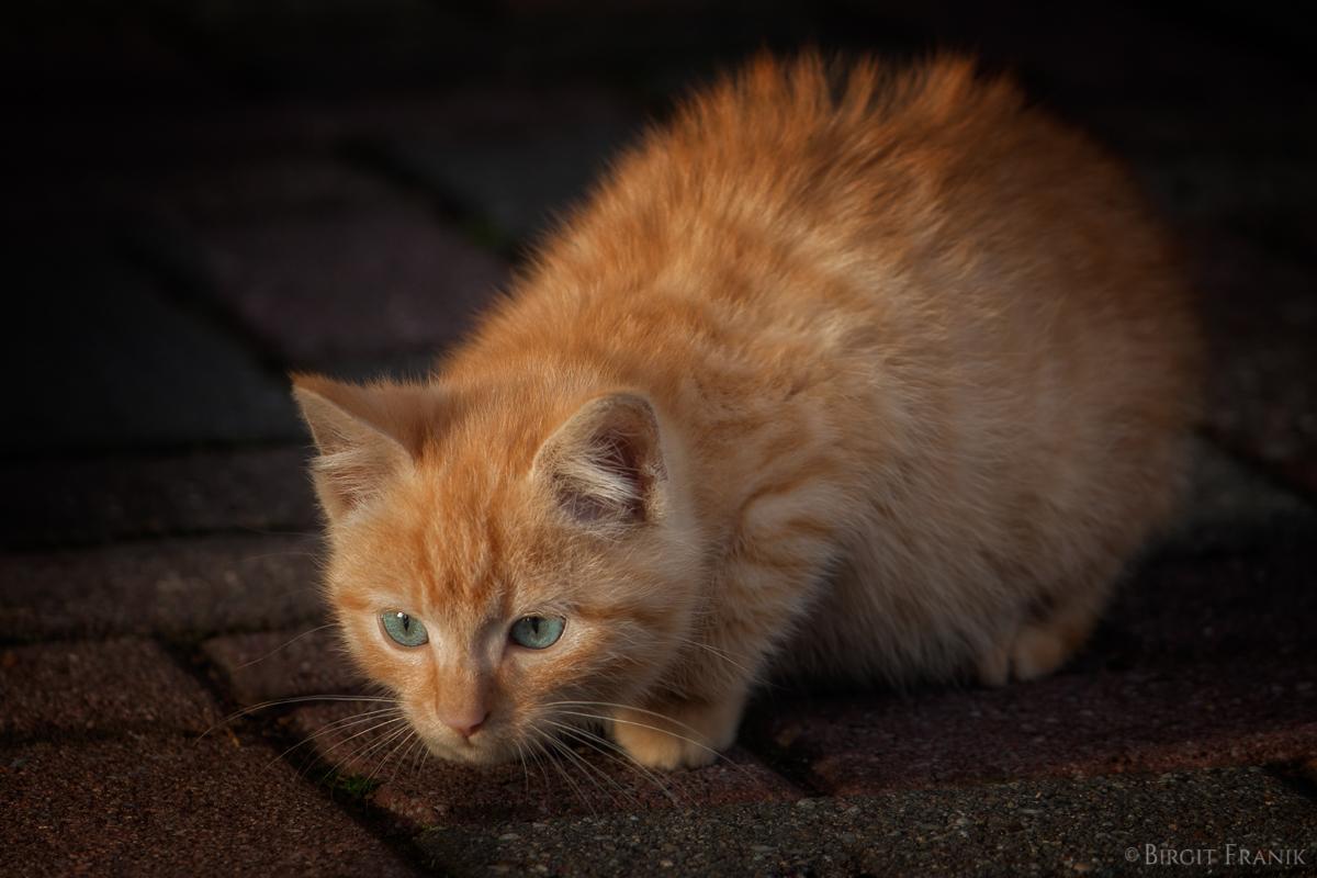 Garfield II