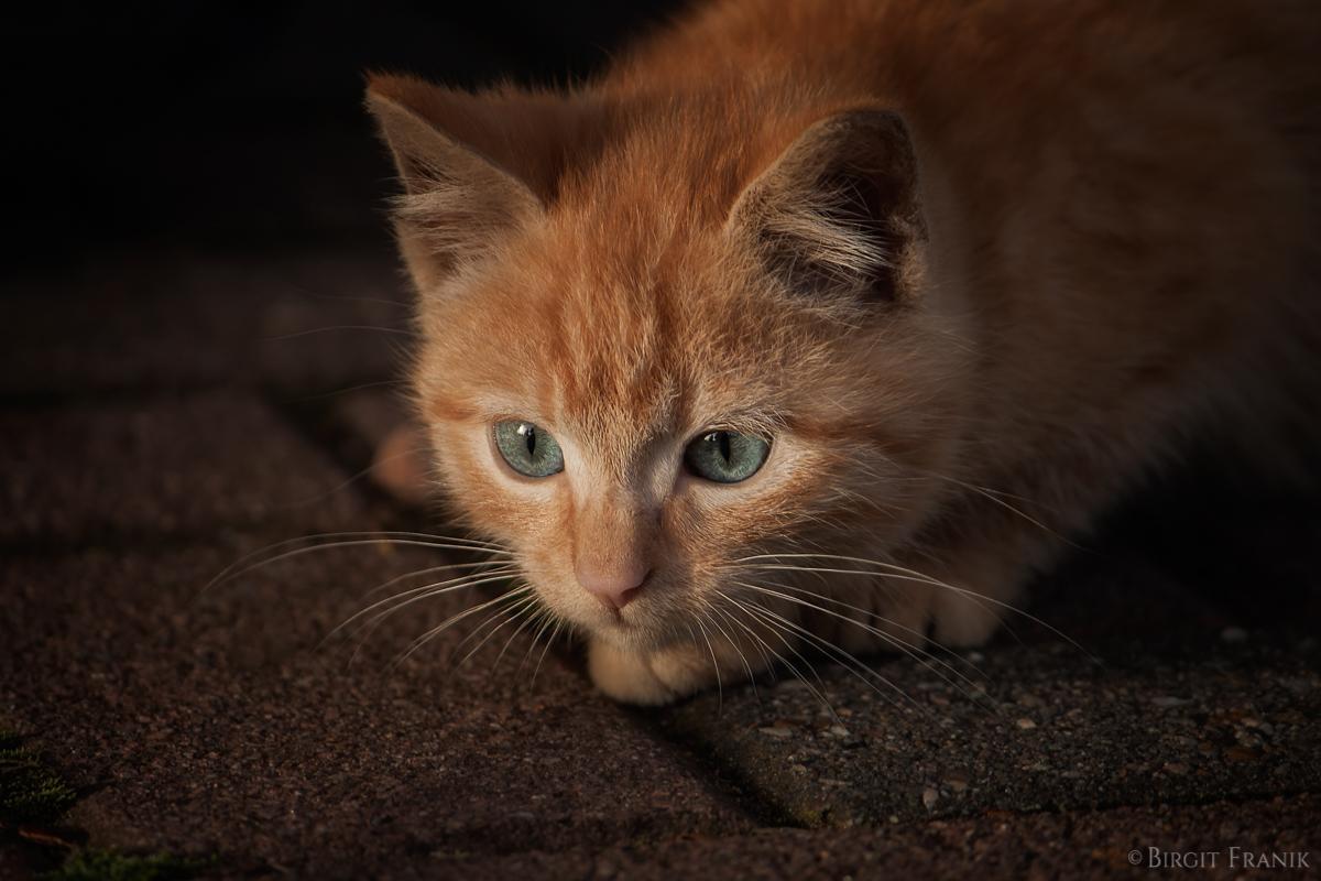 Garfield III