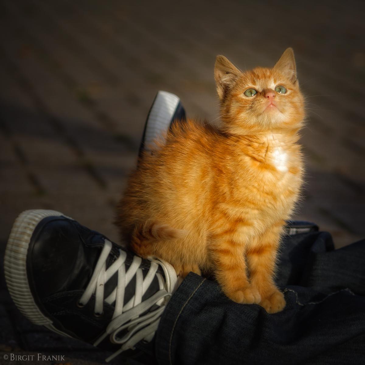 Garfield IV
