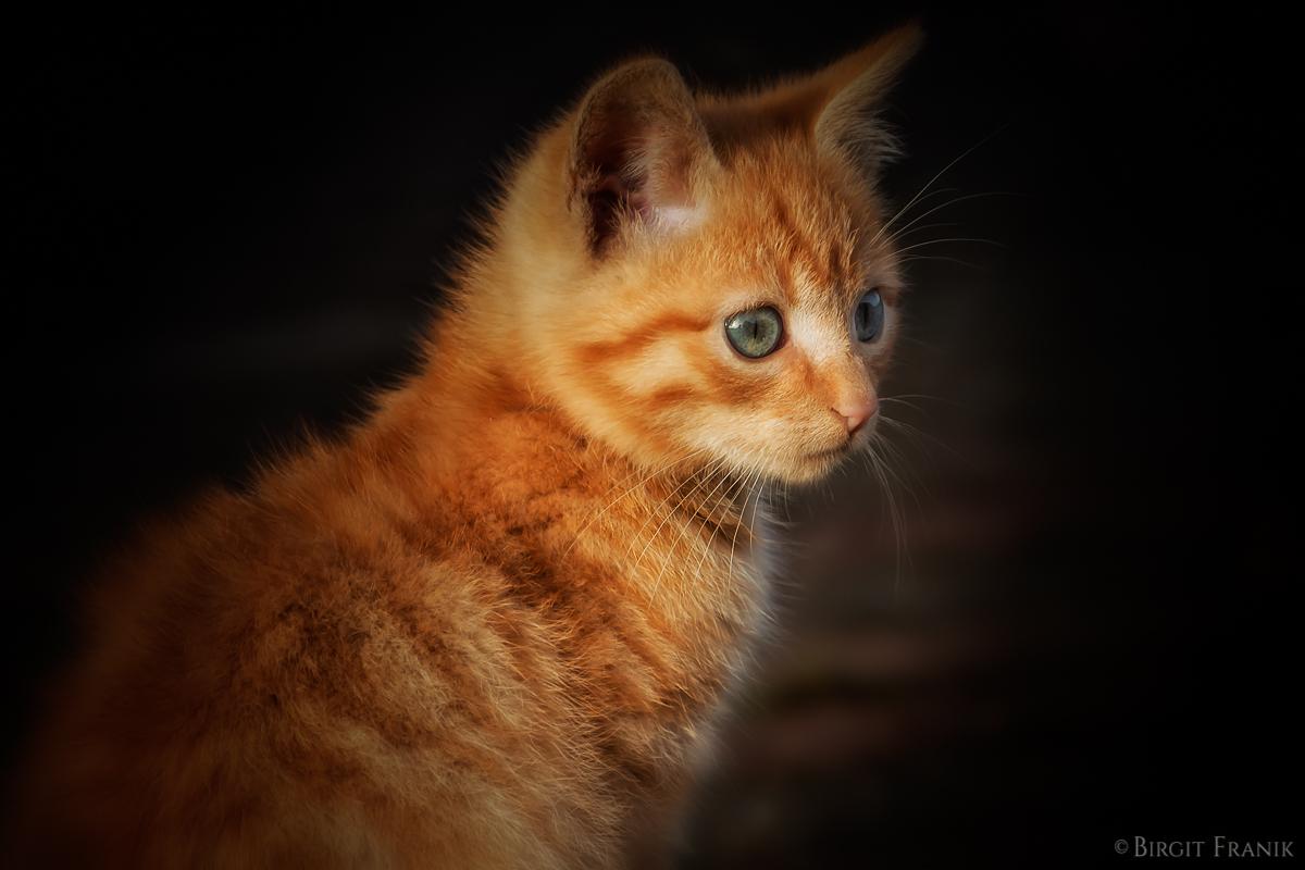 Garfield V