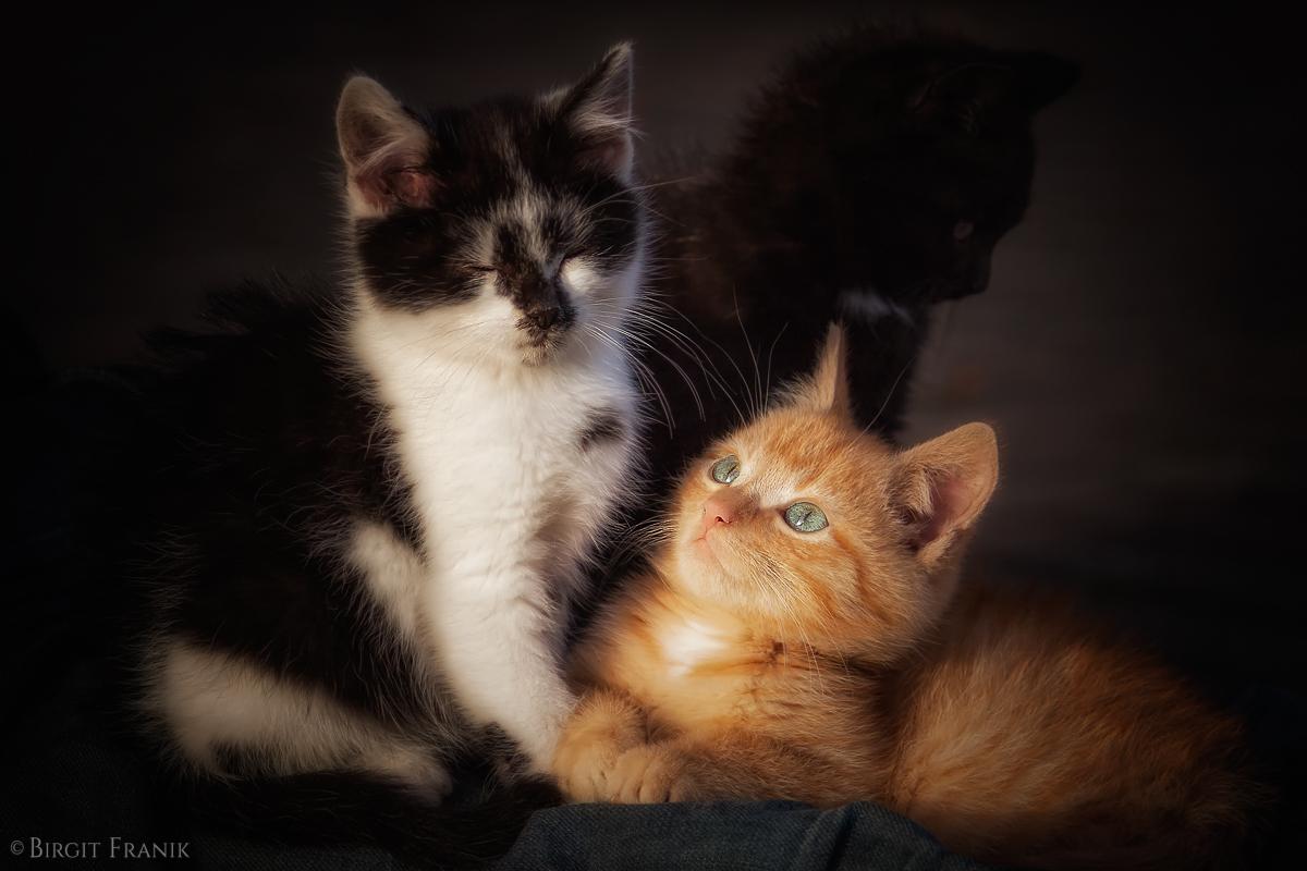 3 Katzenkinder
