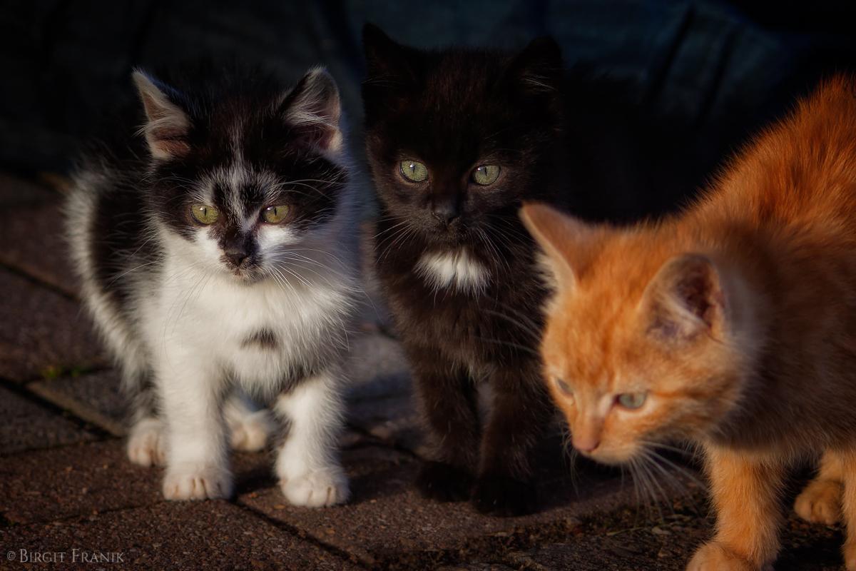 Plüschi, Morle, Garfield