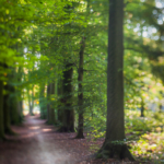 Heart of Woods