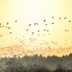 Mehrfachbelichtung Vögel