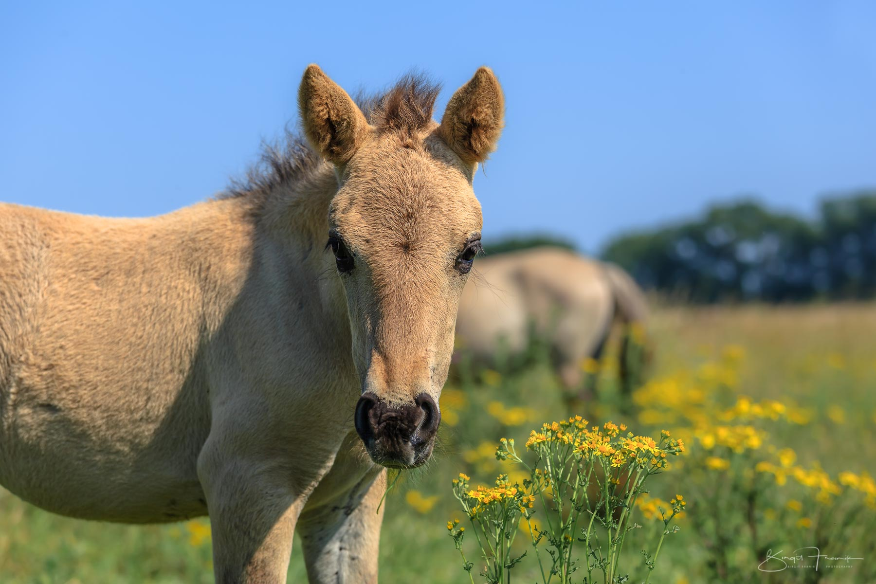 Wildpferde in NL