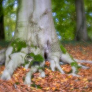 Lensbaby Velvet 56 - f/1.6