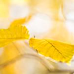 Autumncolors