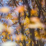 Herbstpaar I