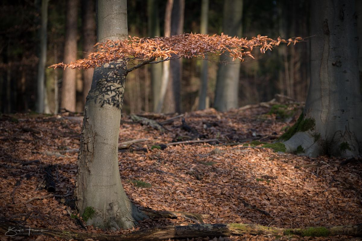 Blätterschirm
